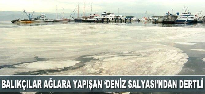"""Marmara'daki balıkçılar ağlara yapışan """"deniz salyası""""ndan dertli"""