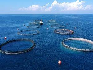 Su ürünleri ihracatından ocakta 90,5 milyon dolarlık gelir elde edildi