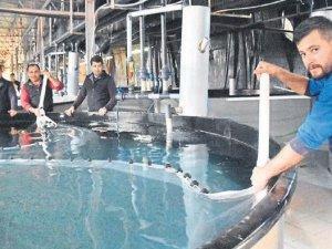 10 milyon yavru balık üretilecek