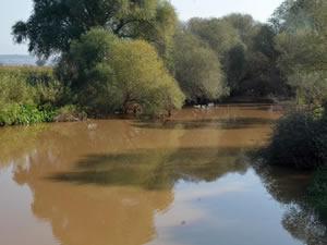 Gediz Nehri'nde balık ölümlerinin sebebi anlaşıldı