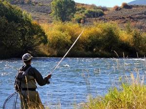 15 Haziran'a kadar iç sularda Sazan,Şiraz ve Yayın balığı avlamak yasak
