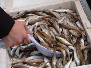 Balık piyasasında durgunluk yaşanıyor