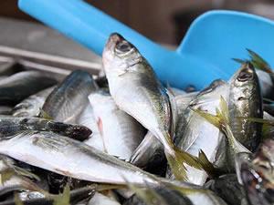 Rusya'ya 17 milyon dolarlık balık ihraç edildi