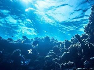 Okyanuslar ısındıkça deniz canlıları kutuplara doğru gidiyor