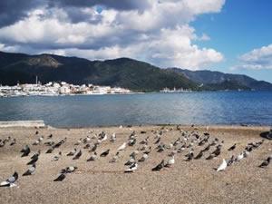 Marmarisliler yasaklara uydu, sahiller güvercin ve martılara kaldı