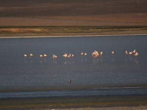 Düden Gölü'nün misafirleri flamingolar geldi