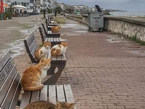Deniz kıyıları kedilere kaldı