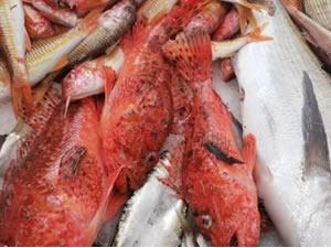 Çeşme'de balıkçılar, evlere balık servisi yapıyor