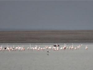 Koronavirüs nedeniyle ziyaret edilmeyen Seyfe Gölü'ne kuşlar akın ettti