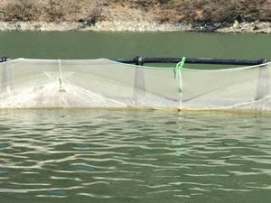 Karadere Barajında balık üretimi artıyor
