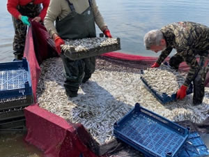 Balık ihracatı yüzde 17 düştü