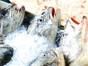 Ankara'da koronavirüs, balıkçıları etkilemedi