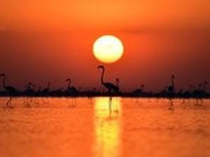 Tuz Gölü Havzası'nda 71 endemik tür tespit edildi