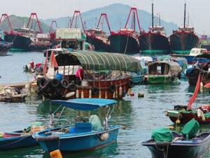 Güney Çin Denizi'nde balık krizi