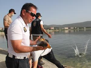 Beyşehir Gölüne balık taşıma mesaisi sürüyor