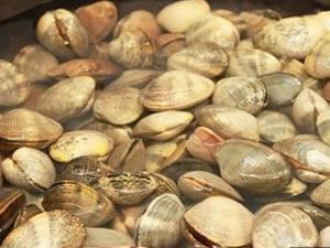 Erdek'te deniz tarağı avlayanlara suçüstü