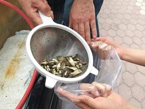 Sivas'ın gölleri balıklandırıldı