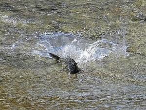 İnsansız doğa, balıklara yaradı