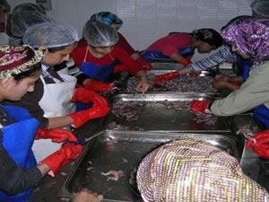 Anadolu su kurbağalarının nesli tehlike altında