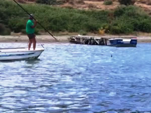 Sahil Güvenlik, öldürülen köpek balığıyla ilgili harekete geçti