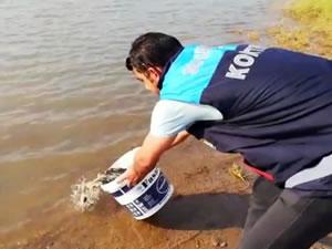 Siirt'te 55 bin yavru pullu sazan balığı gölete bırakıldı