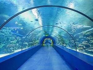 Trabzon'daki Tünel Akvaryum Projesi'nin detayları belli oldu