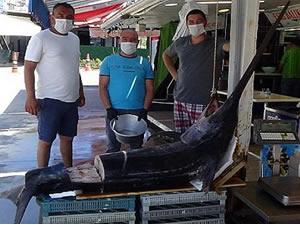 2.5 metrelik dev kılıç balığı Saroz'da yakalandı