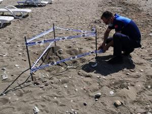Deniz kaplumbağasının yumurtaları koruma altına alındı