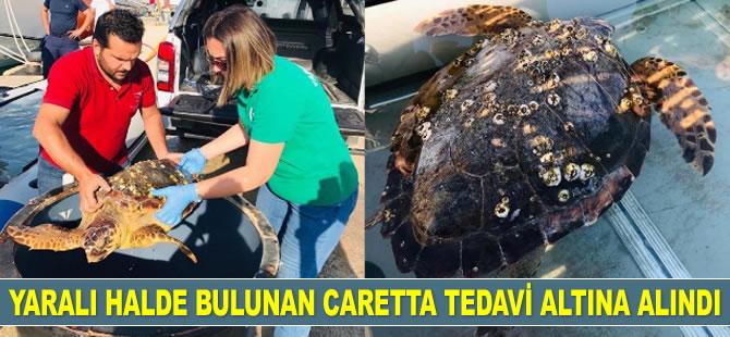 Denizde yaralı halde bulunan caretta caretta tedavi altına alındı