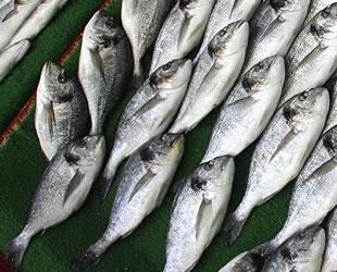 Balıkçılar, yeni sezonda satışların bol olmasını bekliyor