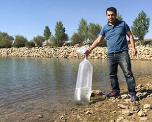 Seydişehir'deki barajlara 35 bin yavru sazan bırakıldı