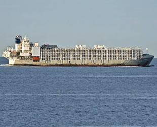 Japonya'da kaybolan 'Gulf Livestock 1' isimli gemiden kötü haber geldi