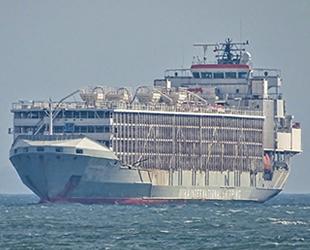 Japonya'da kaybolan 'Gulf Livestock 1' isimli geminin üçüncü mürettebatı kurtarıldı