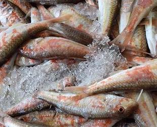 Balıkçılar gözünü barbun ve mezgite dikti