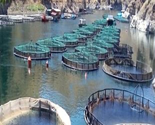Malatya'da somon balığı üretimi artırılacak