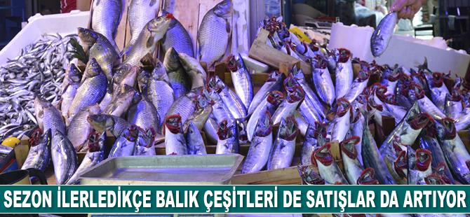 Sezon ilerledikçe balık çeşitleri de satışlar da artıyor