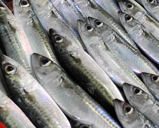 Yasadışı avlanma balık çeşitliliğini azalttı