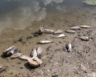 Burdur ve Bursa'daki balık ölümleri korkuttu