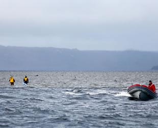 Avustralya, kıyıya vuran ölü balinaları imha edecek