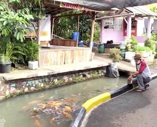 Endonezya'da kanalizasyonda balık üretimi yapılıyor