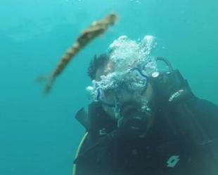 Van Gölü'nde yeni balık türü keşfedildi