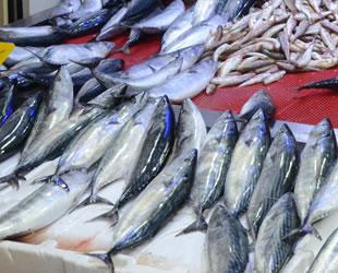 Karadeniz'de oluşan akıntı balık fiyatlarını artırdı