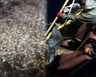 Çanakkale'de boyları küçük olan 15 ton balık denize geri bırakıldı