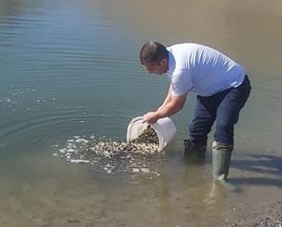Elazığ'da üretilen 5 milyon balık 21 baraja bırakılacak