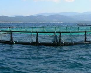 Didim'de kafes kontrolü için denize giren dalgıç hayatını kaybetti