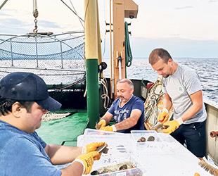 Rapana, Karadenizli balıkçıların alternatif geçim kaynağı oldu