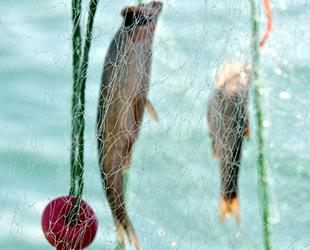 Van'da balıkçı eşleri, balık ağı örecek