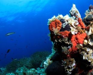Arıtma suyunun kalitesi Körfez'deki yaşamı zenginleştiriyor
