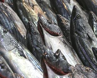 Rize'de balıkçıların yüzü palamutla güldü