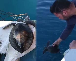 Denizdeki çöplere dolanan yeşil yavru deniz kaplumbağasını balıkçılar kurtardı